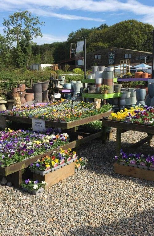 Bunches of colourful bedding plants