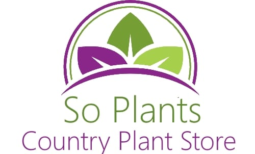 So Plants Limited